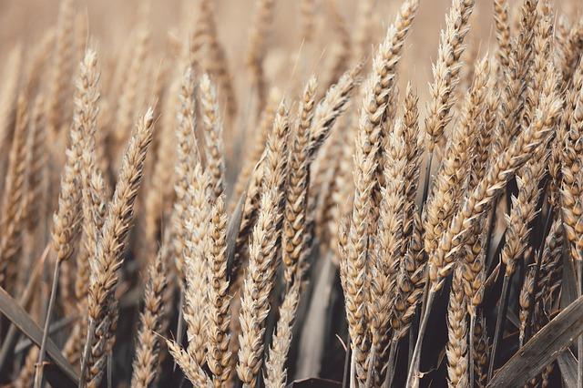 Comment fonctionnent les trieurs à grain?